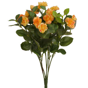 Rose - Diamond Bush - Apricot Orange