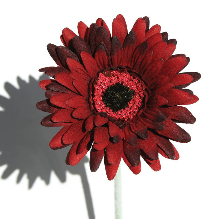 Gerbera - Burgundy  - Box Lot Deal