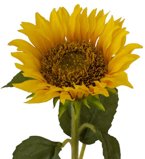 Sunflower - Box Lot Deal (7)