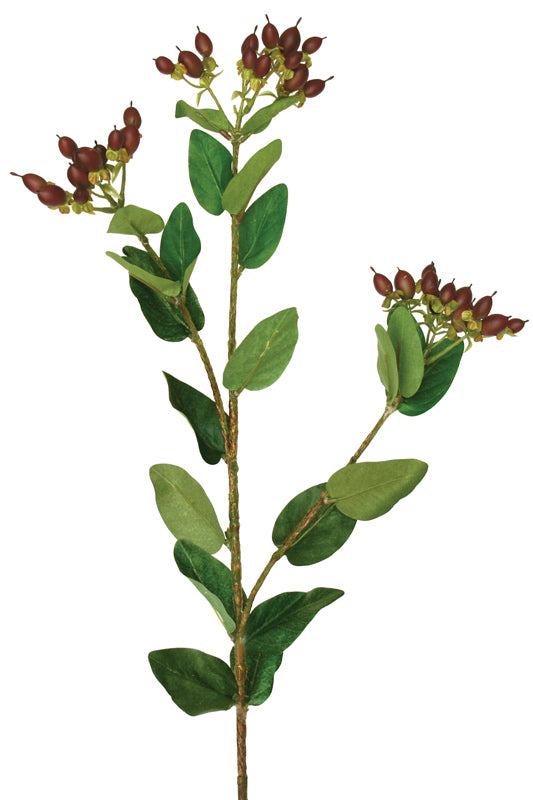 Hypericum Berry Spray