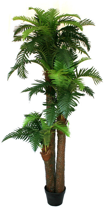 NZ Ponga Fern Large 190cm *** EX-DISPLAY SPECIAL ***