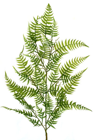 Fern - Single stem long