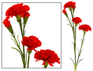 Carnation Bunch - Red