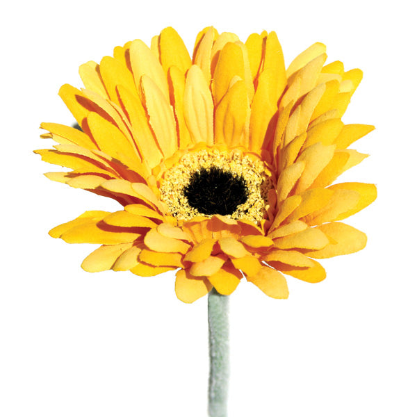Gerbera - Yellow