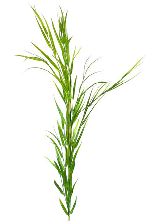 Bamboo Grass - Extra Tall - Box Lot Deal (7)