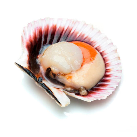 Queen Scallops, Galician Zamburina, +/- 1Kg - The Gourmet Market