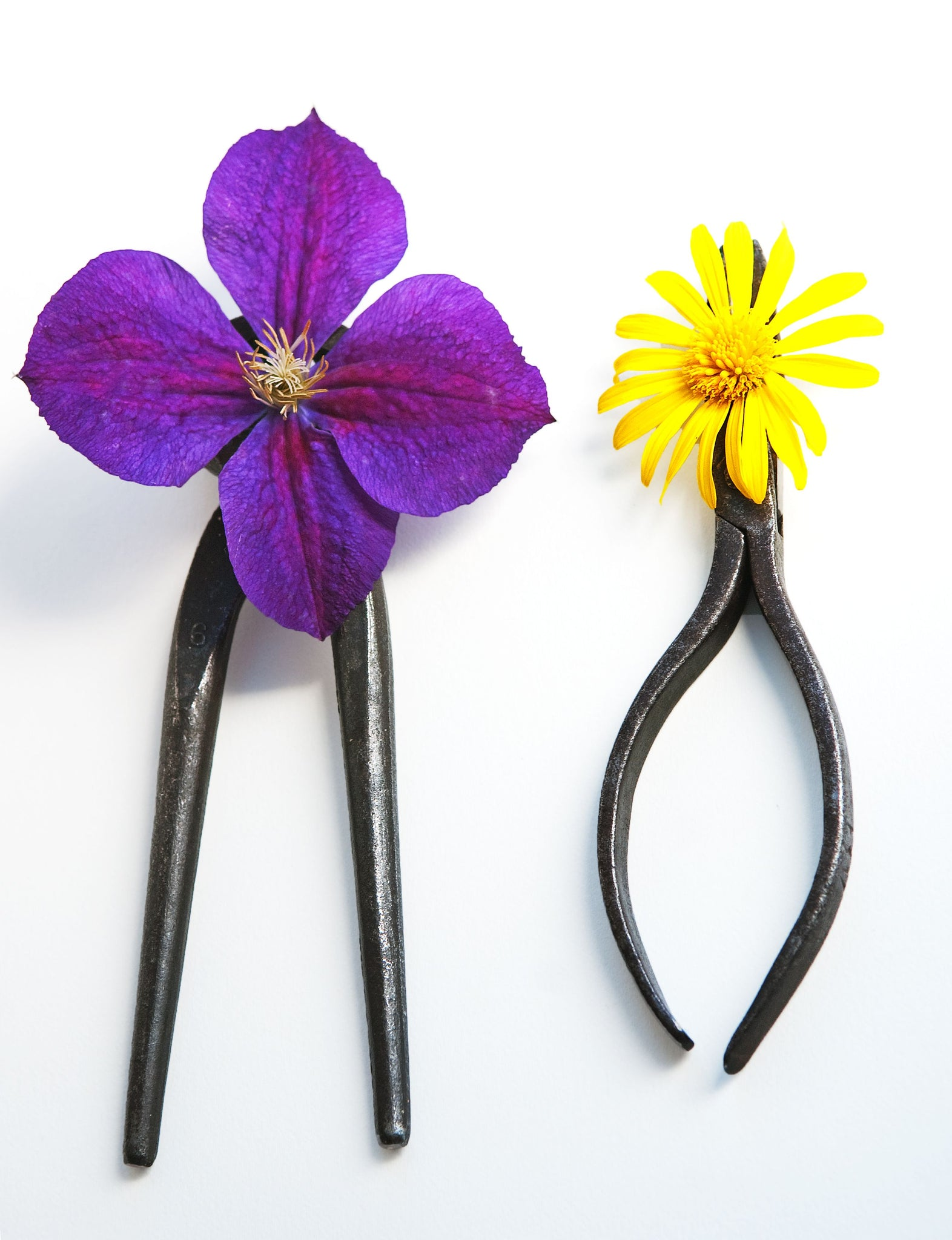 Dating of Mister Clematis Pinzers with Miss Daisy Pliers