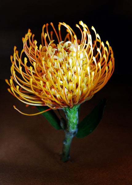 Pincushion Flower or a Great Idea for a Light Bulb Design