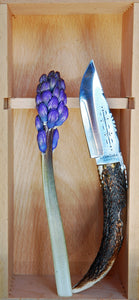Hyacinth flower with a sharp pocket Knife