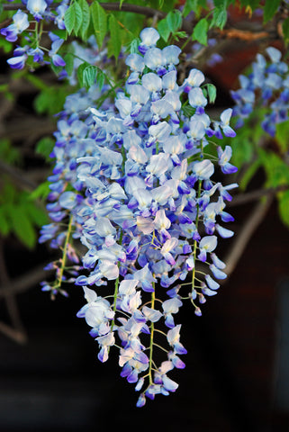 BlueBell Flower -Inspiration for a Natural Lamp