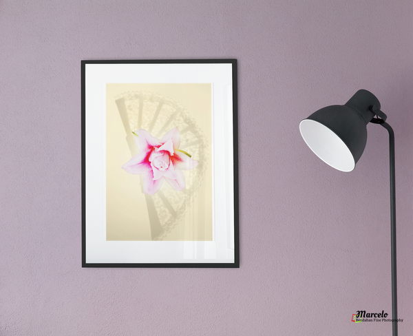 Hand Fan Shadow and Pink Lily flower