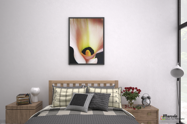 Flor Tubo, A Calla Lily flower to make a shield of Love