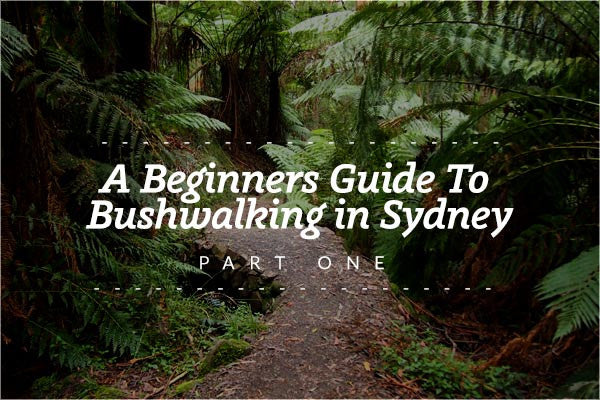 A Beginner's Guide to Bushwalking in Sydney - Part One