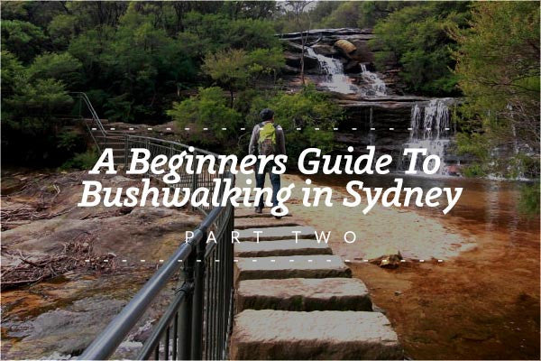 A Beginner's Guide to Bushwalking in Sydney - Part Two