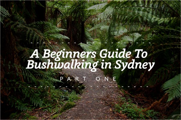 A Beginners Guide To Bushwalking in Sydney - Party One - Bennys Boardroom