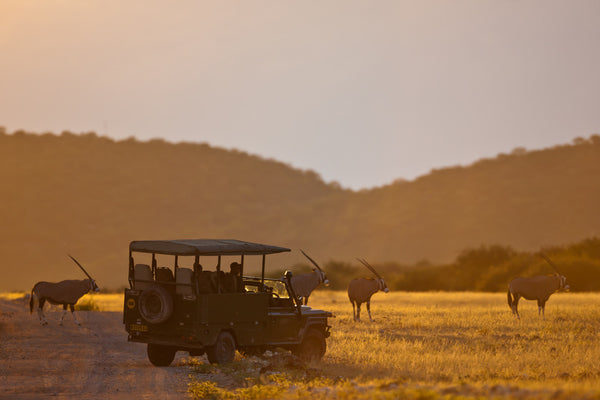 Gemsbok antelopes safari Namibia