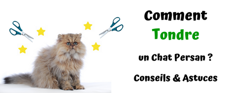 Comment Tondre un Chat Persan ?
