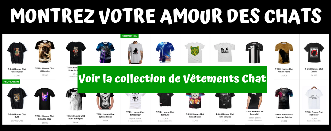 collection vetements chat
