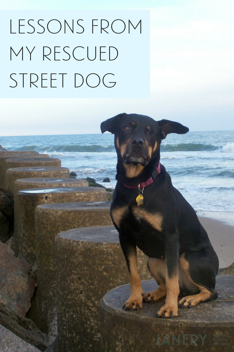Janery Blog Lessons from my rescued street dog Charlie
