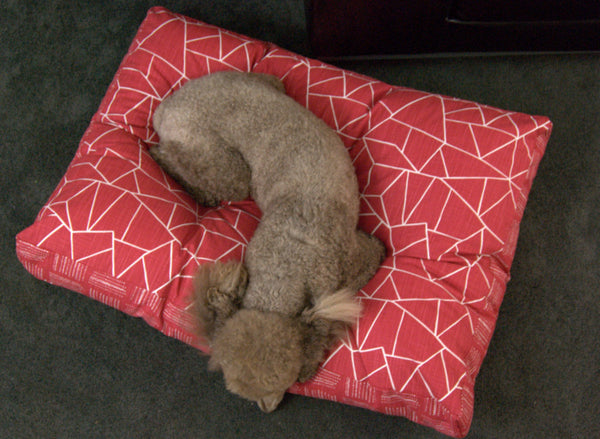 Find the right pet bed size