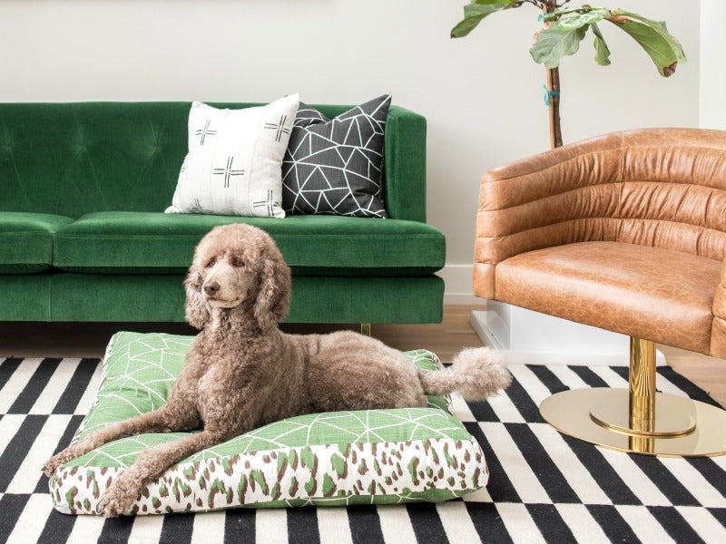 Janery Charlie Cushion Waterproof Dog Bed Gemstone Emerald Leopard As seen in O Oprah Magazine