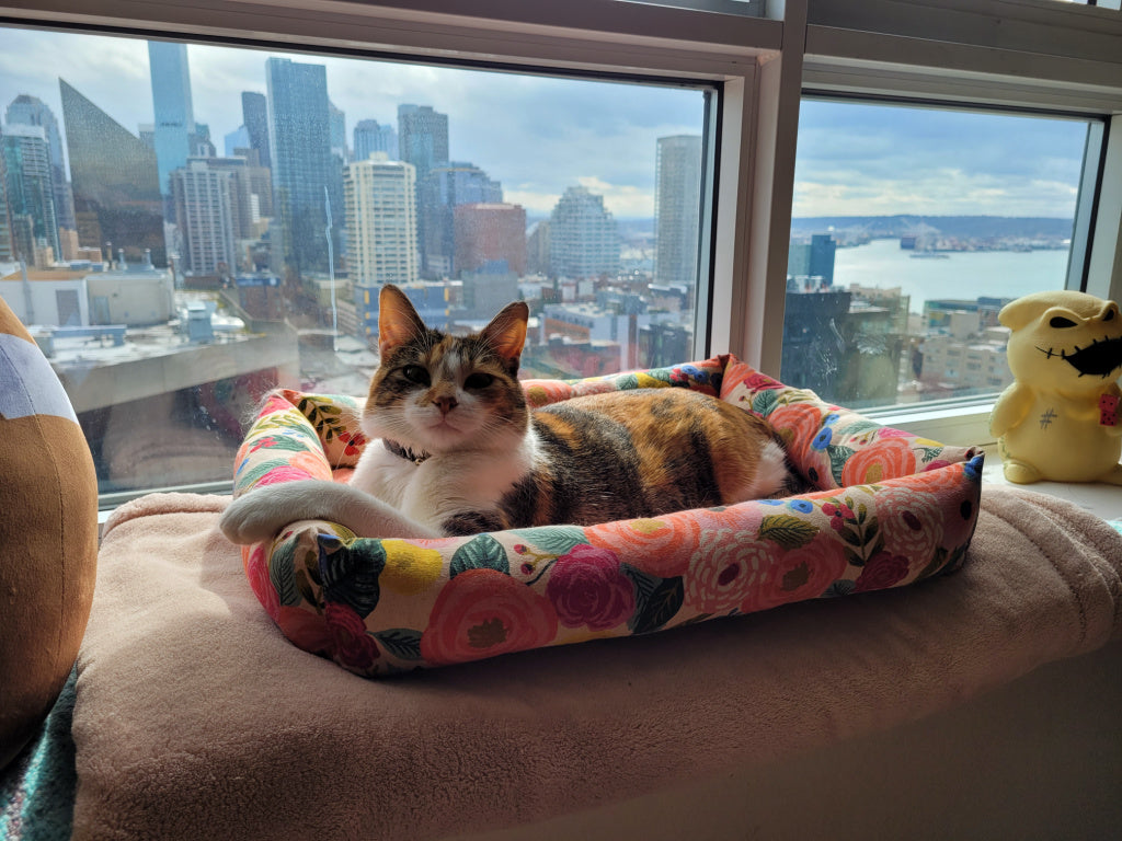 Cat in a Janery Catnip Cuddler sitting on a window seat overlooking a city.