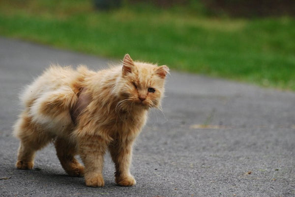 Janery KG the Stray Cat Before Rescue