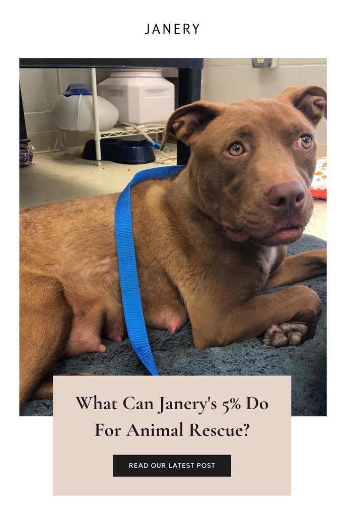 Janery Saves 26 Pets with Quarterly Animal Rescue Donation