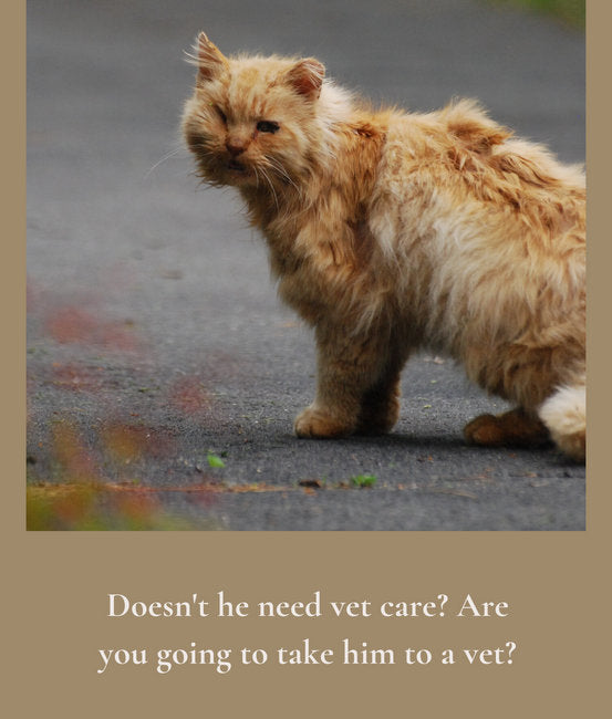 Janery Stray Cat KG Vet Care FAQ