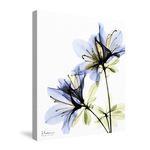 Azalea Canvas Wall Art