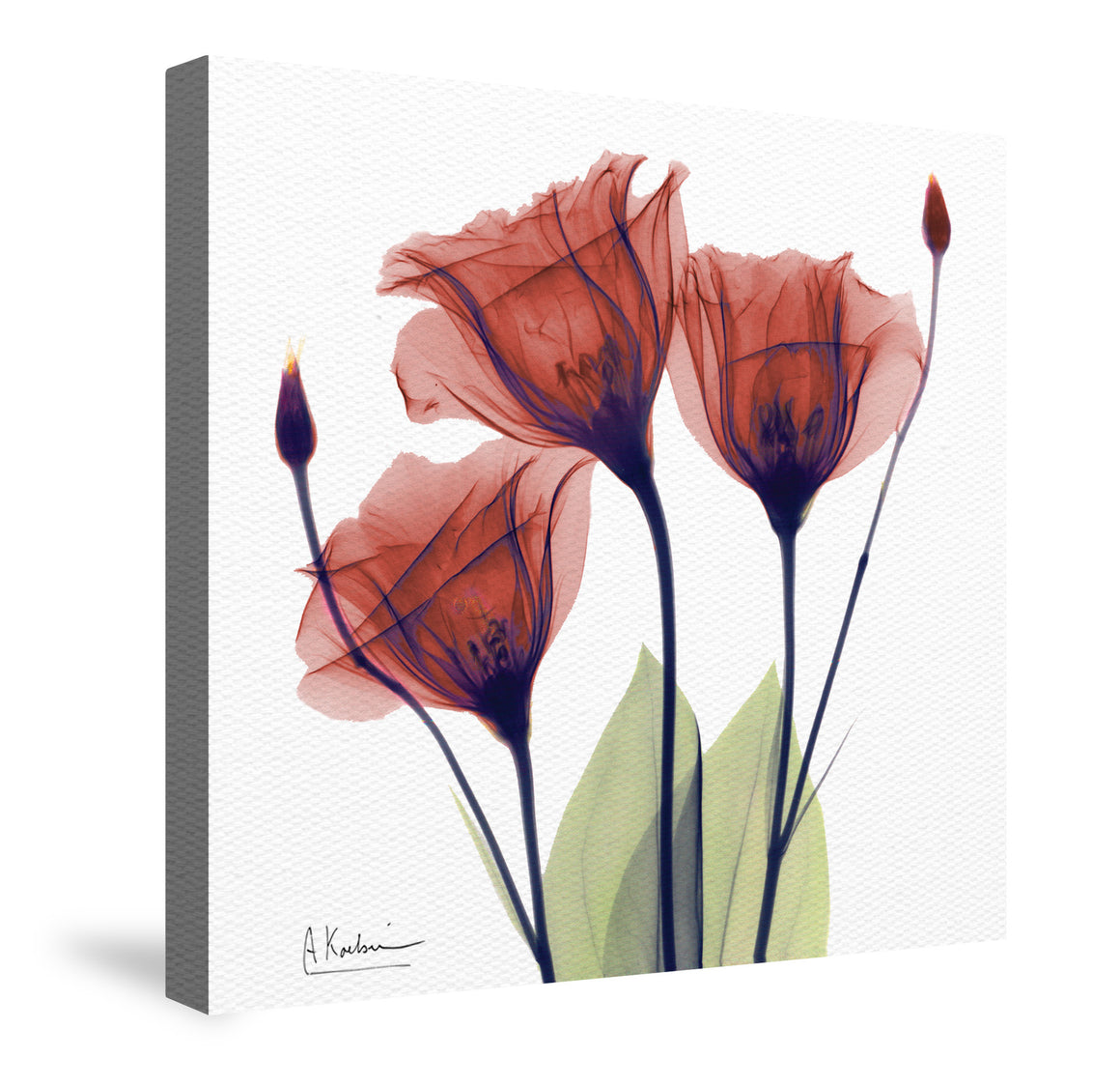 Red Gentian X-Ray Flower Canvas Wall Art