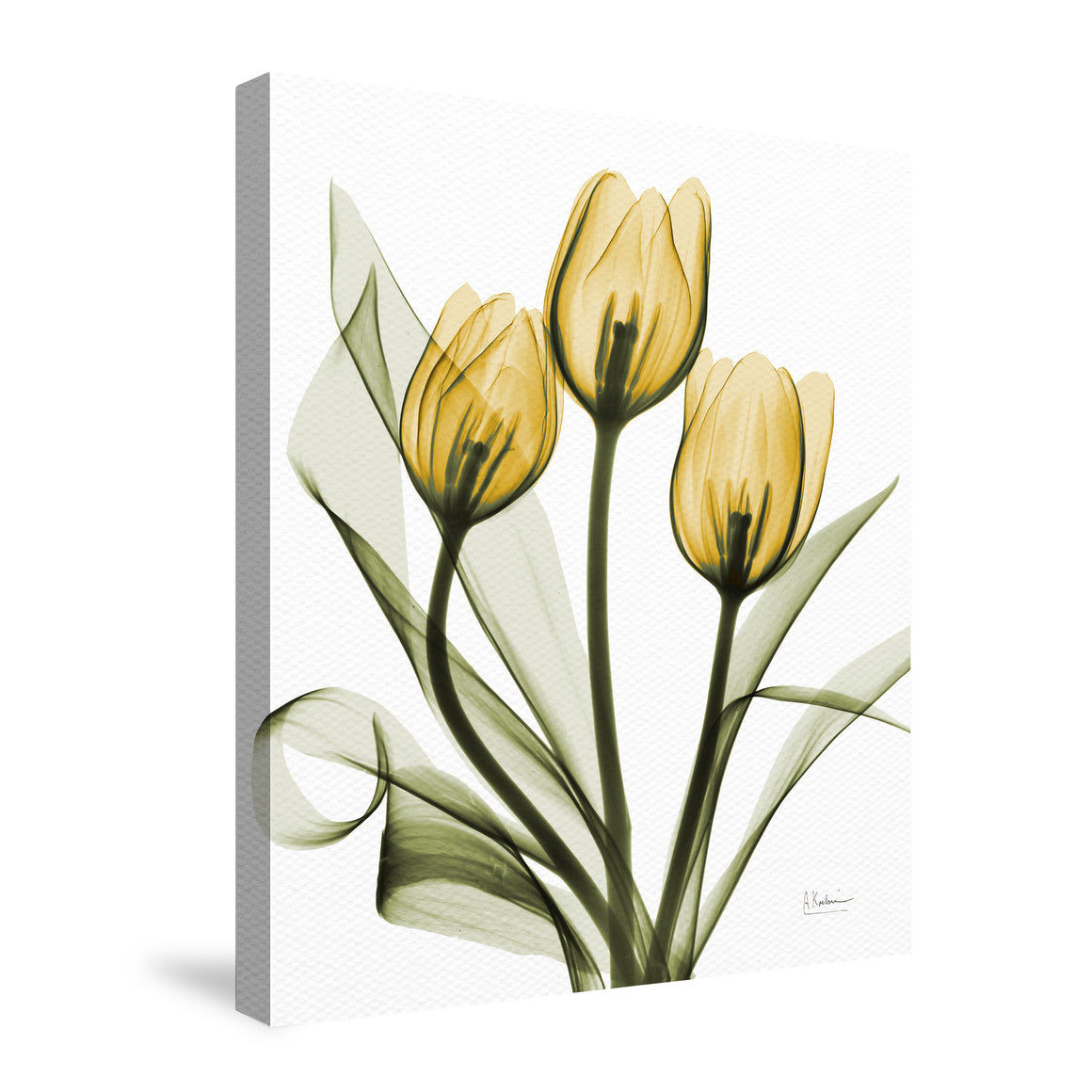 Golden X-Ray Tulips Canvas Wall Art