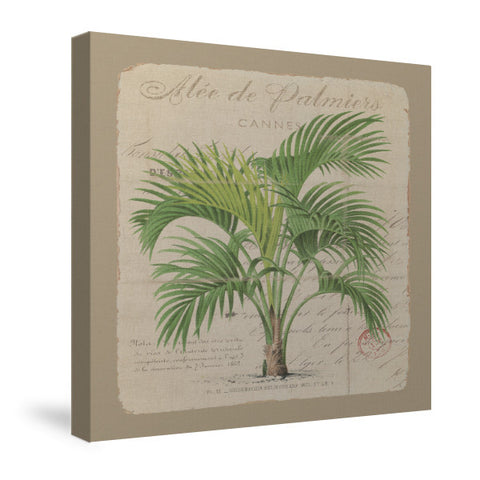 Alee de Palmiers Canvas Wall Art