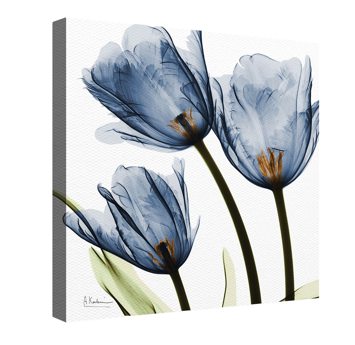 "The ""Blue Tulip Canvas Wall Art"" exposes calming, beautiful floral image with a special technique using an x-ray machine and a cluster of flowers."