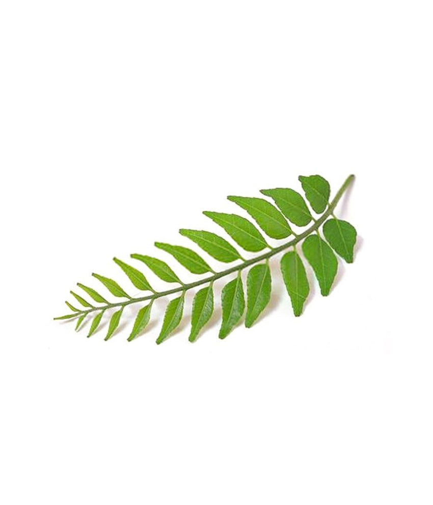 Curry Leaves  1/4 oz / 7 gram - Daily Fresh Grocery