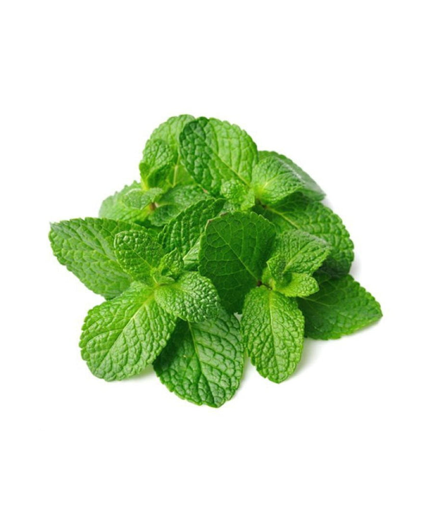 Fresh Mint – Podina (Each) - Daily Fresh Grocery