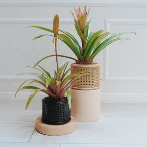 Fun Nest - Solihiya Planter (4799393234978)