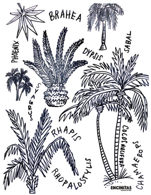 Palm Trees Coloring Page