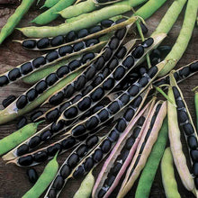Load image into Gallery viewer, Organic Bhatt (Black Soybeans)