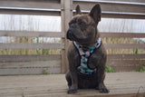 Pink Geometric Dog Harness (French Bulldog)