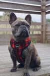 Country Tartan Dog Harness (French Bulldog)