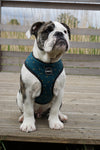 Blue Bumble Bee Harness (bulldog)