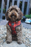 Country Tartan Dog Harness (Cockapoo)