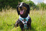 Pink Geometric Dog Harness (Dachshund)