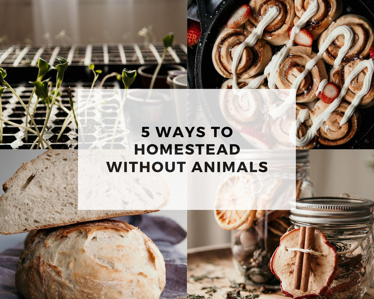 5 Ways to Homestead without Animals