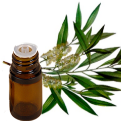 Tea Tree Essential Oil /gram - Zero Waste Bali