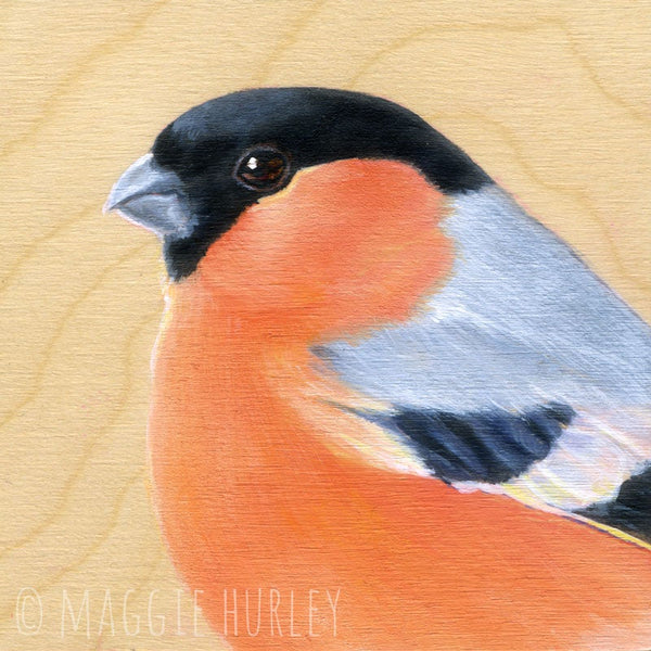 Eurasian Bullfinch Bird Print on Wood by Maggie Hurley