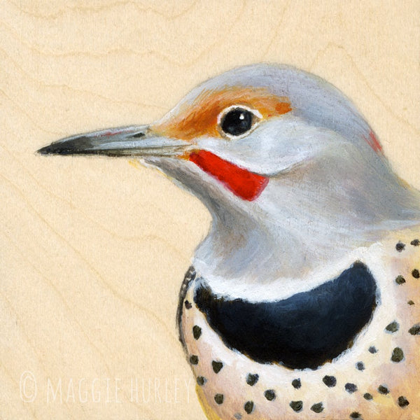 Northern Flicker Bird Print on Wood by Maggie Hurley