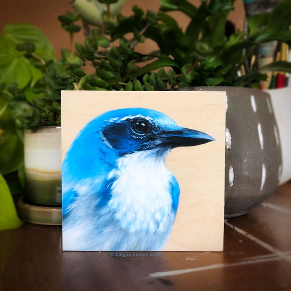 California Scrub-jay Bird Print on Wood by Maggie Hurley