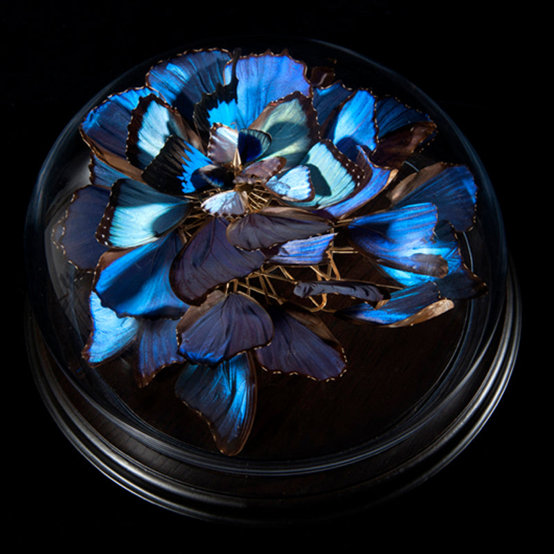 <center>Morpho Bloom 01</center>